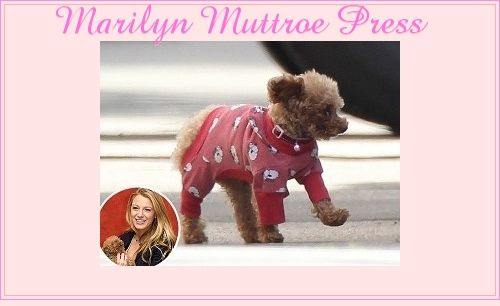 http://www.marilynmuttroepetboutique.com/press.html#.UQplGmf-jVA