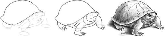 Karakalem Kaplumbağa çizimi